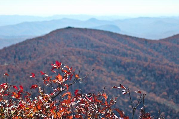 #Fall on the #BlueRidgeParkway | ASpicyPerspective.com