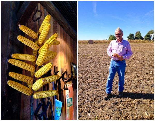 Corn Farming in Iowa