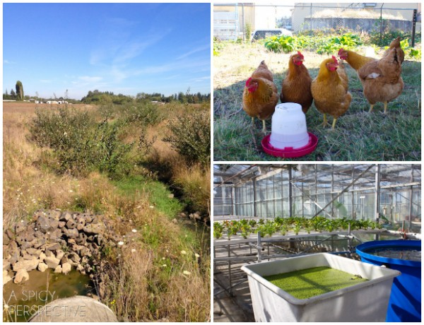 Pacific Foods Farms