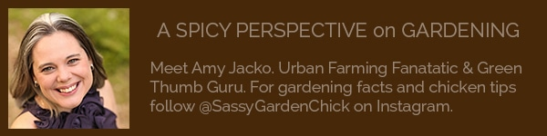 A Spicy Perspective on Gardening
