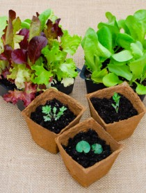 Easy Gardening 101: Starting Seeds Indoors #gardening #garden #seeds #DIY