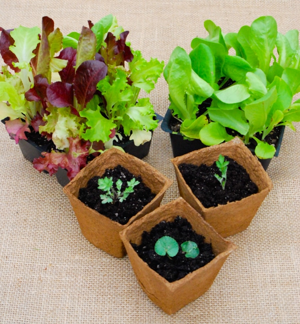 Start Garden Seeds Indoors Starting seeds indoors easy gardening 101 starting seeds indoors gardening garden seeds diy workwithnaturefo
