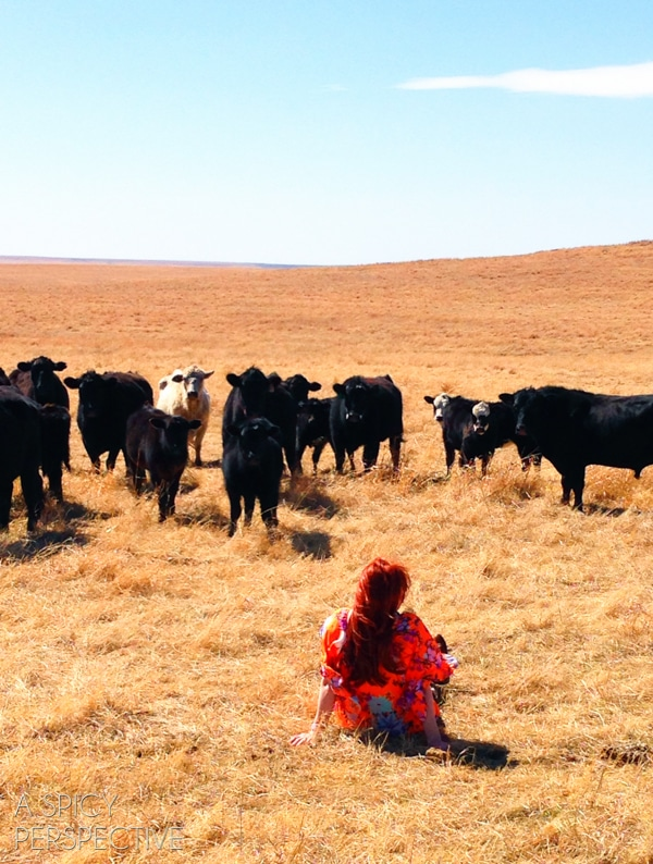 Ree Drummond - The Cow Whisperer