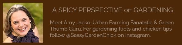 Amy Jacko
