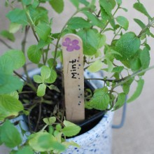 Easy #DIY Garden Marker Tags #garden #gardening #seedlings #craft