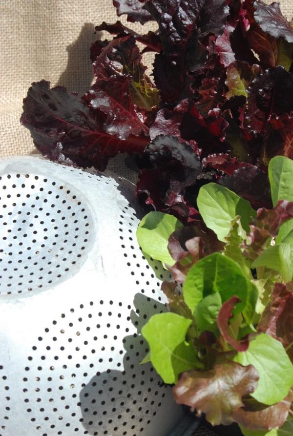 How to Make: Lettuce Leaf Hanging Baskets #garden #gardening #diy #upcycle