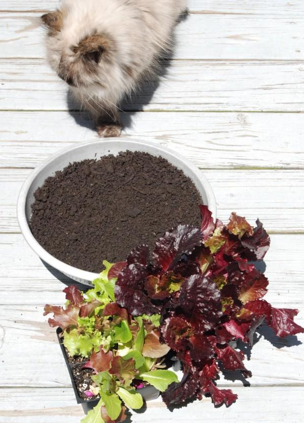 Make Lettuce Leaf Hanging Baskets #garden #gardening #diy #upcycle