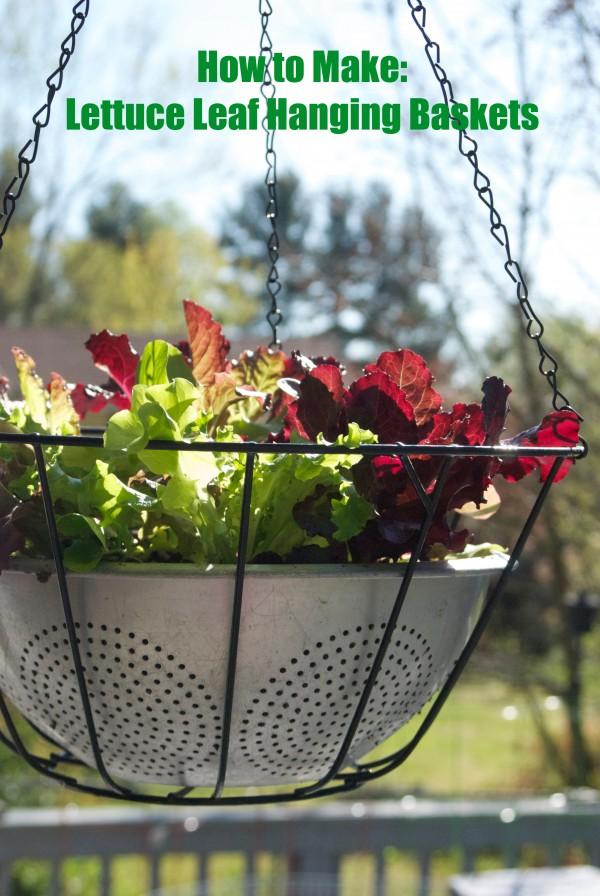 How to Make Lettuce Leaf Hanging Baskets #garden #gardening #diy #upcycle