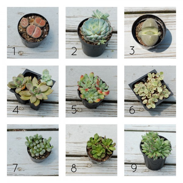 Types of succulents for What kind of house do i have