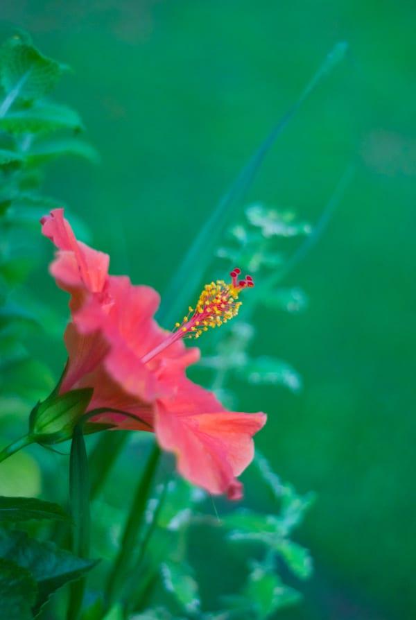 Planting a Tea Garden #gardening #teagarden #tea