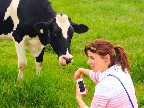 Helen the Cow #kitchenconvo