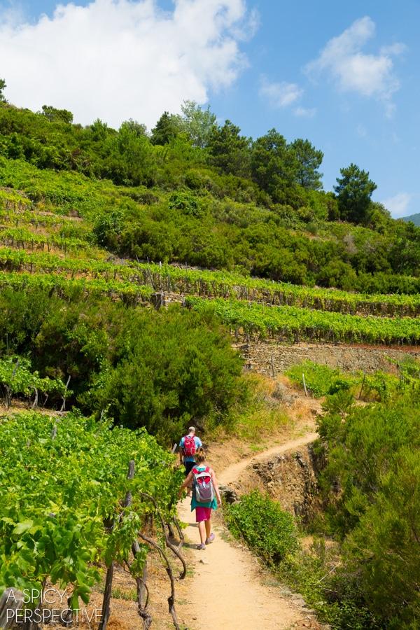 Hiking Cinque Terre, Italy #travel #italy #cinqueterre