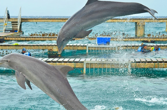 Dolphin Discovery in Cozumel, Mexico