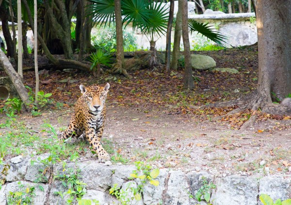 Animals - Things To Do In Playa Del Carmen Mexico #travel #mexico