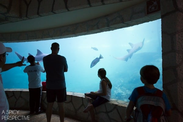 XCaret - Things To Do In Playa Del Carmen Mexico #travel #mexico
