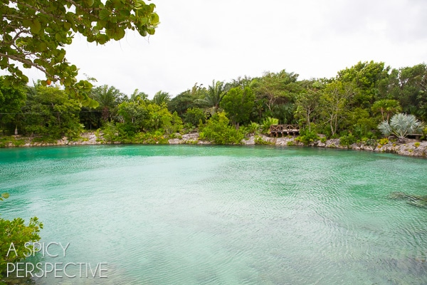 Nature - Things to do in Cozumel Mexico #travel #mexico