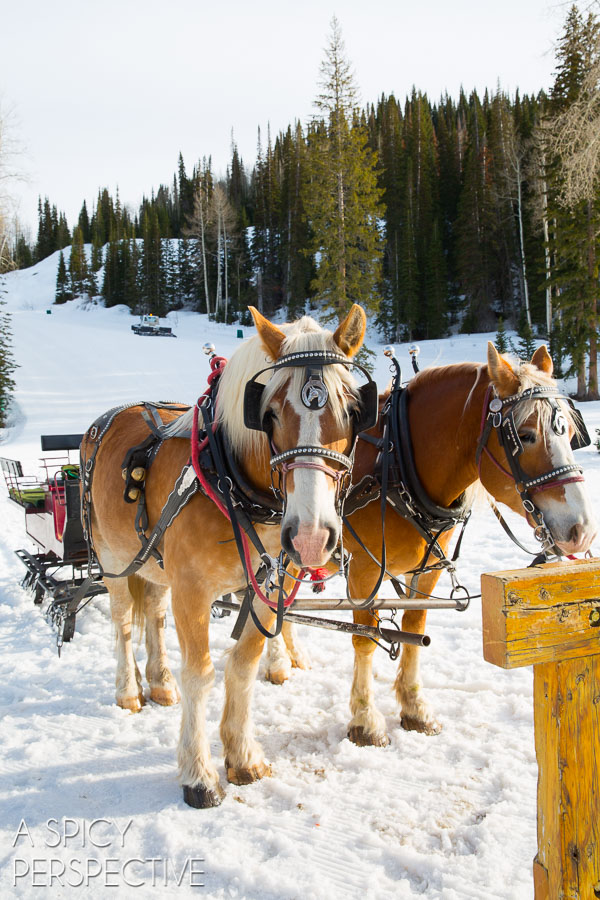 Sleigh Ride in Park City Utah #travel #utah #family