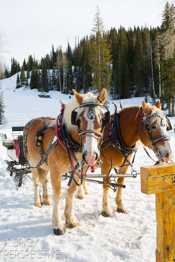 Sleigh Ride in Park City Utah #travel #utah #family