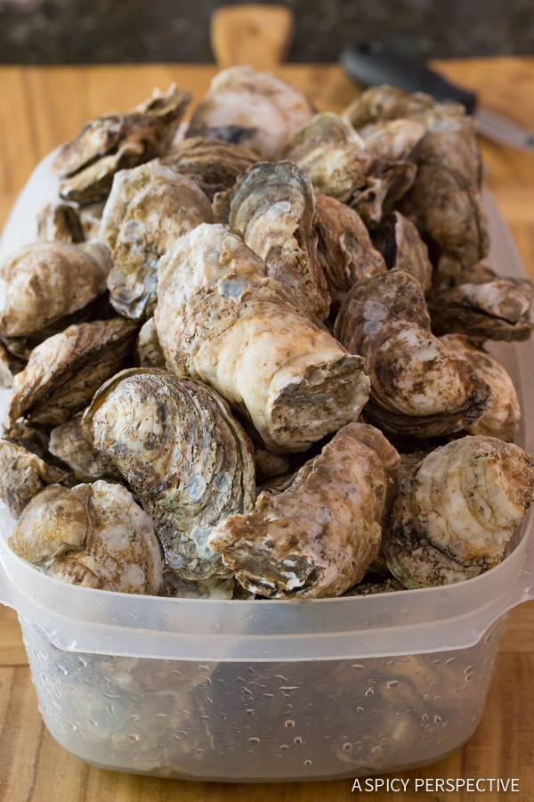 Tutorial: How to Shuck Oysters (And Steam Oysters, and throw an Oyster Shucking Party, and...) on ASpicyPerspective.com #oysters #howto