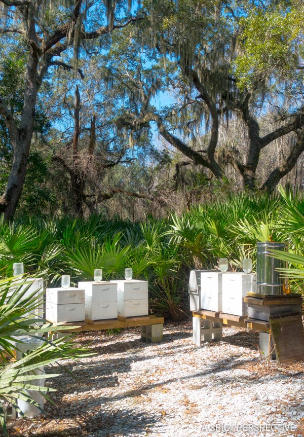 Omni Beehives - Visit Amelia Island, Florida | ASpicyPerspective.com