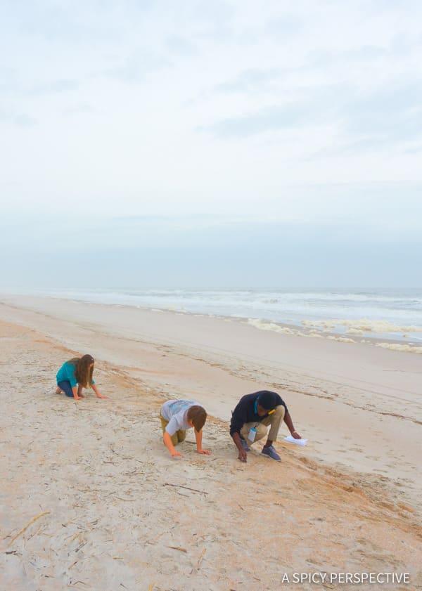 Shark Tooth Hunt - Amelia Island, Florida Travel Planning Tips | ASpicyPerspective.com