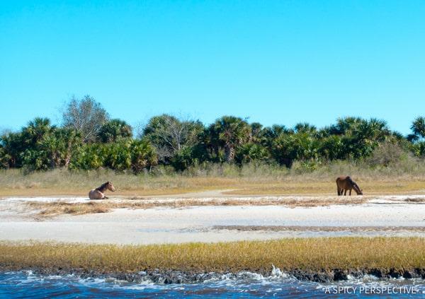 River Cruise - Visit Amelia Island, Florida | ASpicyPerspective.com