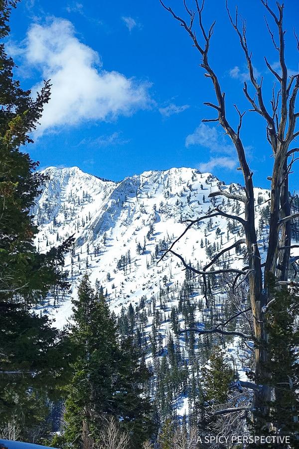 Solitude Mountain Resort