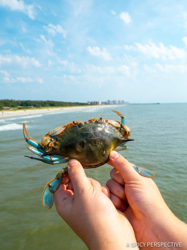 Crabbing: Myrtle Beach, Beyond The Boardwalk - Travel Tips for Making the Most of Your Myrtle Beach, South Carolina Vacation!
