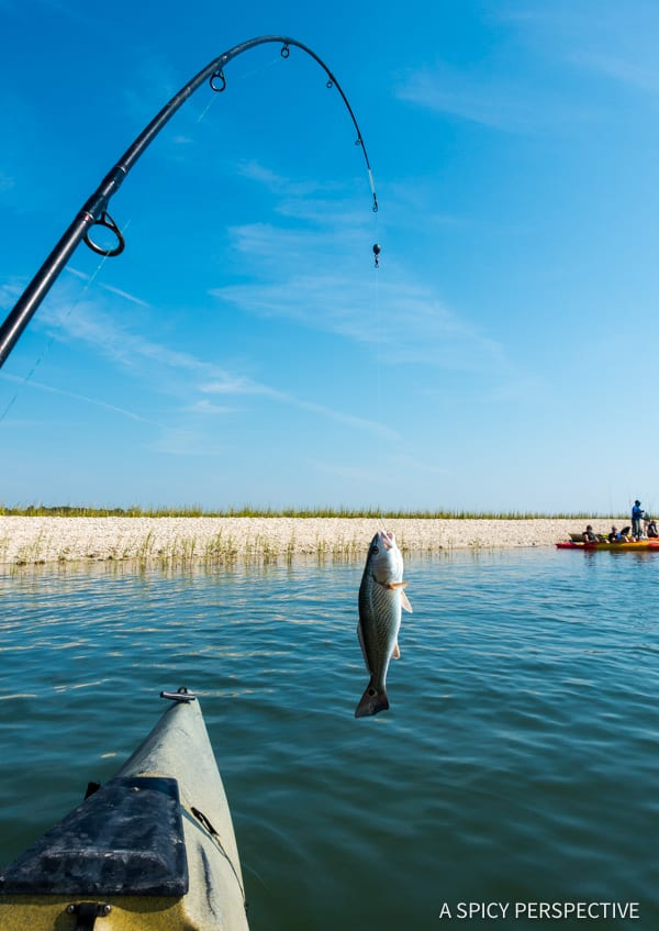 Kayak Fishing Trip: Myrtle Beach, Beyond The Boardwalk - Travel Tips for Making the Most of Your Myrtle Beach, South Carolina Vacation!