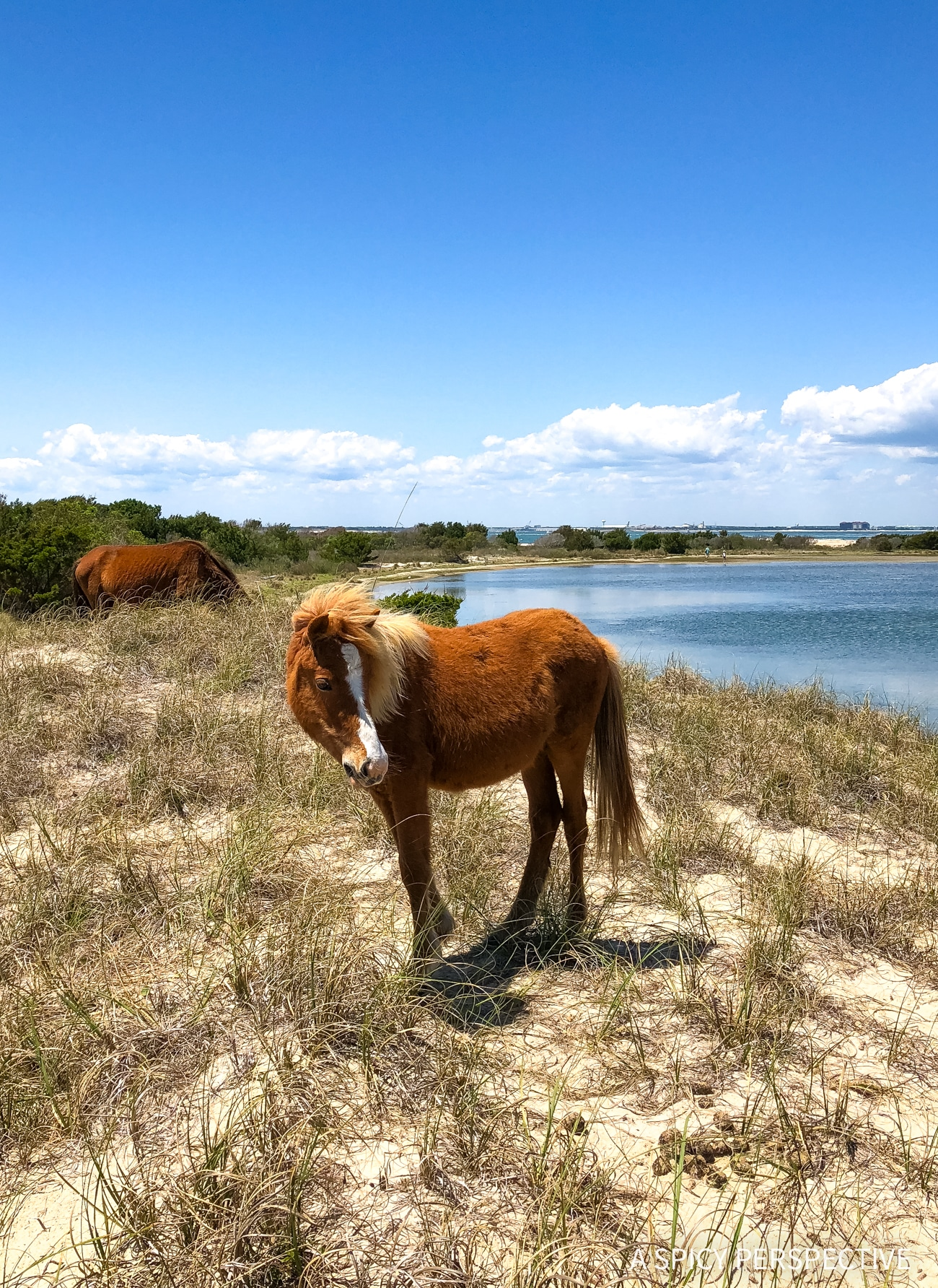 Shackleford Banks - Why You Should Visit The Crystal Coast Outer Banks NC (Emerald Isle Vacation Travel Tips!)
