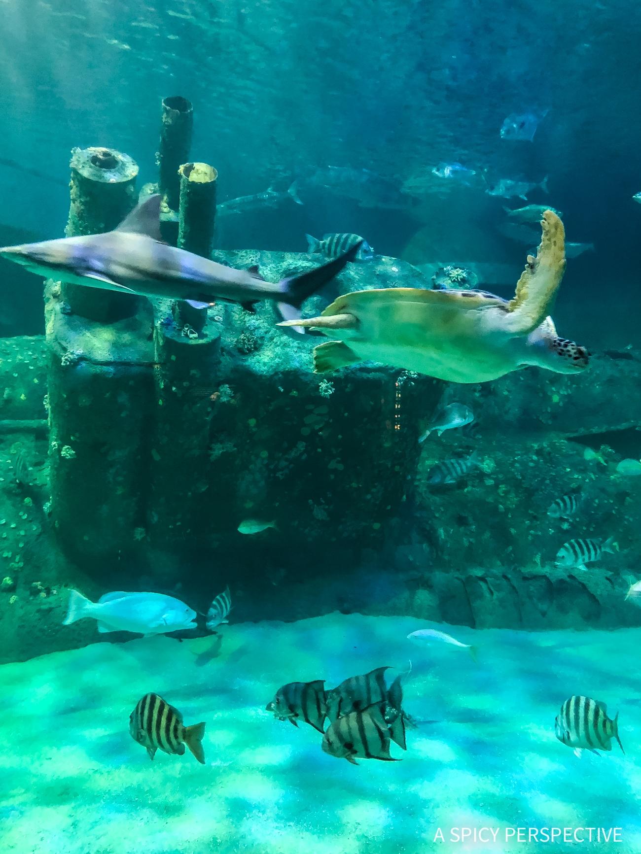 NC Aquarium - Why You Should Visit The Crystal Coast Outer Banks NC (Emerald Isle Vacation Travel Tips!)