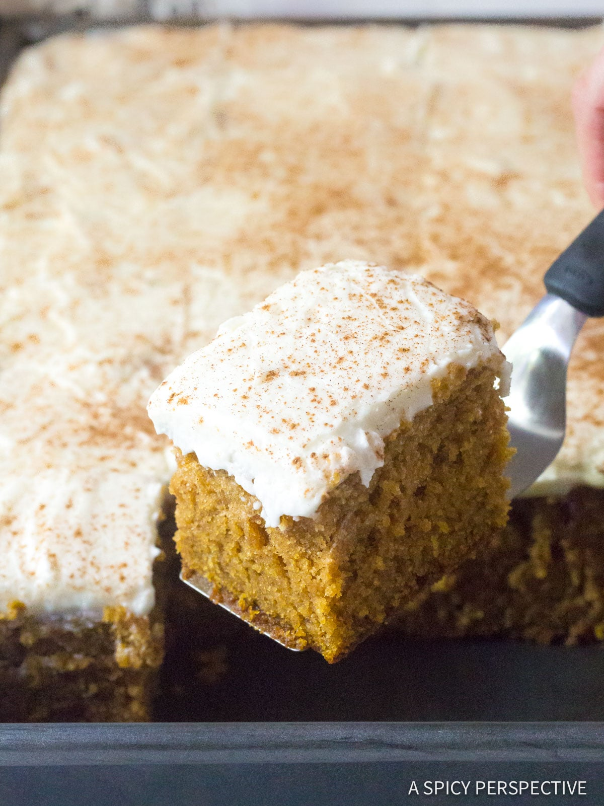 Spiced Pumpkin Texas Sheet Cake with Buttermilk Frosting Recipe #ASpicyPerspective