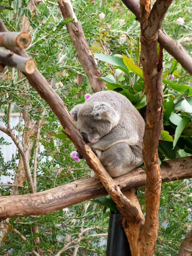 San Diego Zoo Tips #ASpicyPerspective #travel #vacation #california